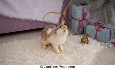 Fluffy beige bunny resting in studio - Video footage of ...