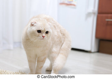 Fluffy beige kitten in room on floor