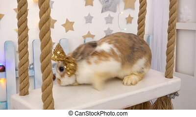 Fluffy beige rabbit on a seesaw - Video footage of fluffy ...