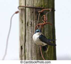 Fluffy bird on a wire