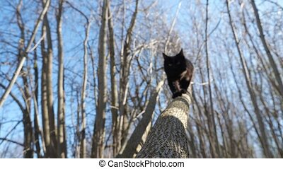 Fluffy black cat descends from a tree.
