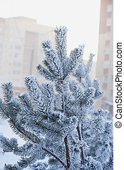 Fluffy branches of tree covered with snow and hoar frost on a cold day.