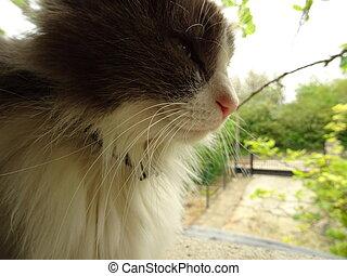 Fluffy Cat in a Green Garden