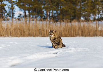 Fluffy cat in the winter in the snow