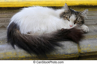 fluffy cat photo - fluffy beautiful cat lying on the street...
