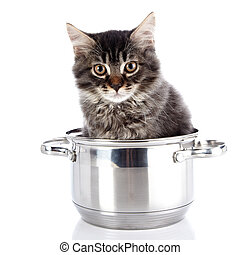 Fluffy cat with brown eyes in a pan. - Fluffy cat in a pan....