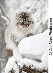 Fluffy curious cat in the winter park - Domestic long hair...