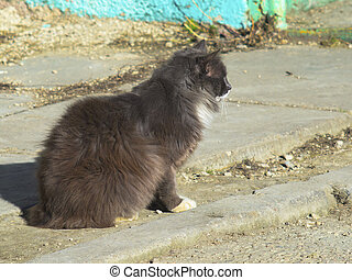 Fluffy cute cat sitting on the ground