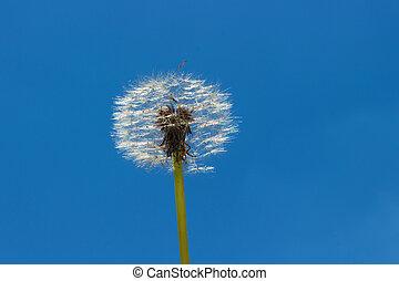 Fluffy dandelion on sky