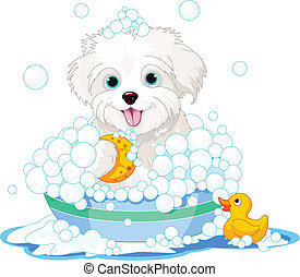 Fluffy dog having a bath - White fluffy dog having a soapy...