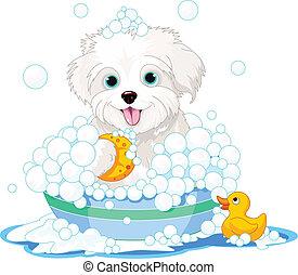 Fluffy dog having a bath