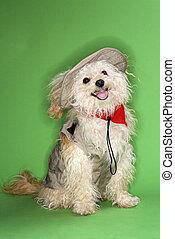 Fluffy dog in safari outfit. - Fluffy small dog in safari...