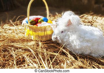 Fluffy easter angora bunny - Cute white fluffy angora bunny...