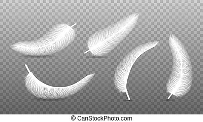 fluffy feather with shadow vector realistic set isolated on transparent background.