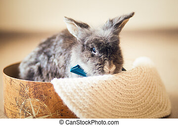 Fluffy gray rabbit with blue bow tie