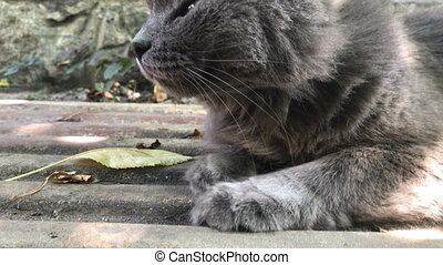 fluffy grey cat with round eyes outdoors