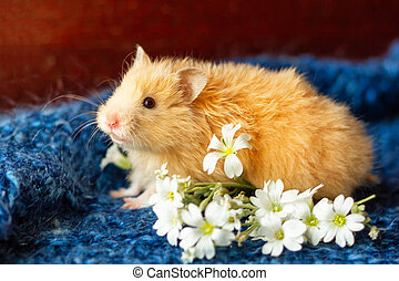 fluffy hamster with flowers on blue background