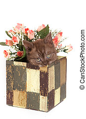 Fluffy kitten British cat sitting in a box of flowers (isolated on white)