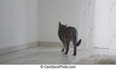 Fluffy kitten inside living room closeup footage - Fluffy ...