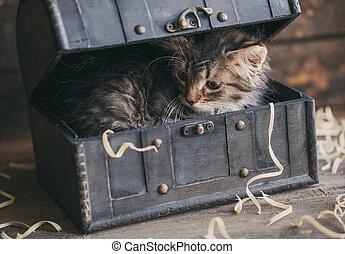 Fluffy kitten sitting in a chest