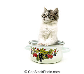 fluffy kitten sitting in a metal pan isolated over white backgro