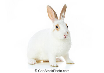 Image of cautious rabbit over white background in isolation