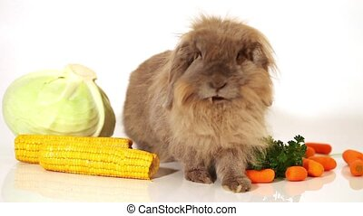 fluffy rabbit with vegetables
