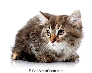 Fluffy scared cat on a white background.