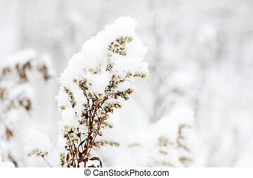 Fluffy snow on dry grass in the winter forest close up