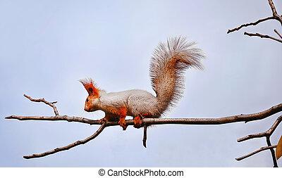 Fluffy squirrel on a tree branch