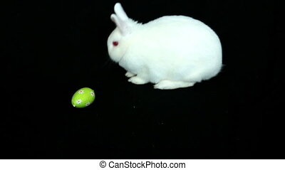 Fluffy white rabbit with easter eggs rolling towards him on...