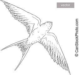 fluga, wings., sky, realistisk, vector., svälja, fågel