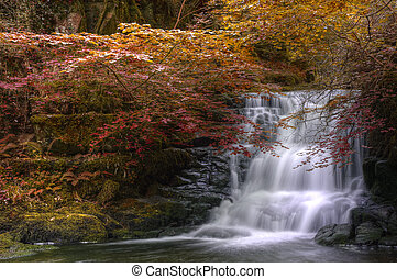 fluir, otoño, cascada, por, bosque, otoño, paisaje