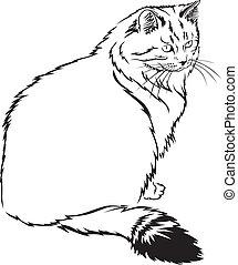 Flurry cat