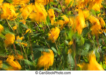 Slow shutter speed on flowers in the breeze to give a flurry of flowers effect