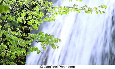 flux eau, printemps, chute eau