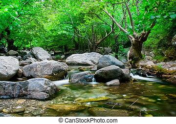 fluxo, com, cinzento, pedras, e, árvore