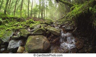 fluxs, carapthian, par, ruisseau, montagnes, son, naturel