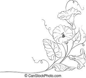 Fl;wers of bindweed. Isolated on white. Vector illustration.