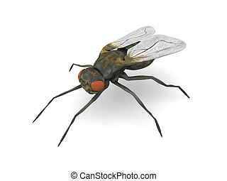 Fly - 3D rendered Illustration.