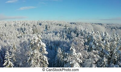 Fly above epic snow covered forest in cold winter at daytime...
