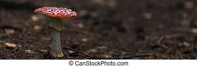 fly agaric red mushroom with white dots in the forest