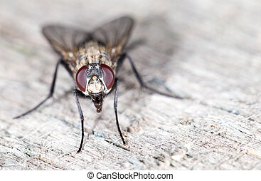 fly., close-up