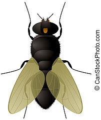 fly close up - Illustration of everyones favorite insect the...