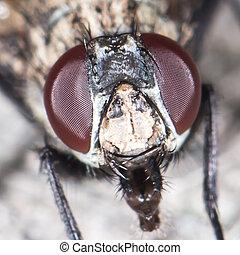 fly., close-up