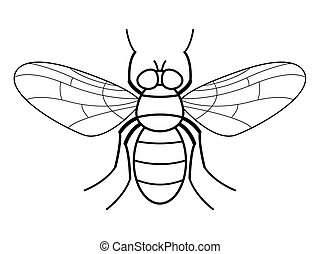 Fly contour illustration