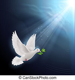 Fly dove - Dove of peace flying with a green twig after ...