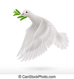 Dove of peace flying with a green twig after flood on white background