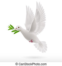 Fly dove - Dove of peace flying with a green twig in beak on...