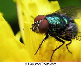 Fly green metalic